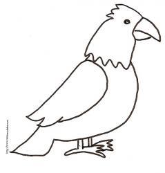 Coloriage de l'aigle