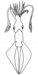 coloriage d'un calamar