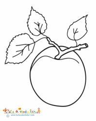 Abricot et ses feuilles