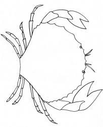 coloriage d'un crabe