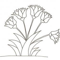 Fleurs de lotus égyptiens
