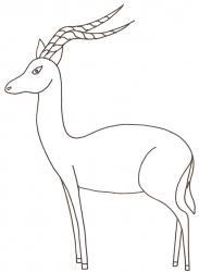 coloriage d'un impala