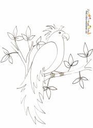 Coloriage oiseau perroquet