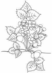 Coloriage d'un beau fraisier en fleurs