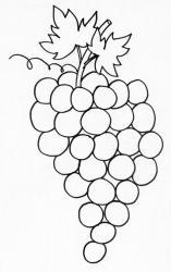 coloriage d'une grappe de raisin