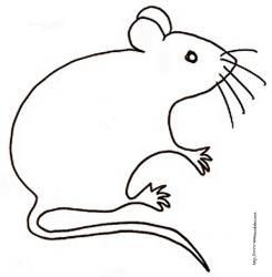 coloriage d'une souris à moustaches
