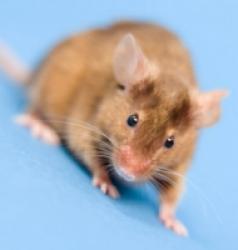 Les soins du Hamster