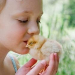Prendre soin des oiseaux