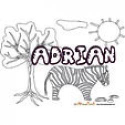 Adrian, coloriages Adrian