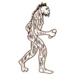 australopitheque petit trapu et poilu