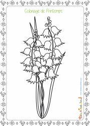 La jacinthe est l'une des fleurs qui fleurissent au printemps, elle est facilement reconnaissable avec ses clochettes de couleur bleue à violette. Un coloriage de printemps à imprimer.