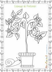 Dessin d'un arbuste en fleurs à colorier sur le thème du printemps : cet arbre planté en pot est un arbre de jardin ou de terrasse.