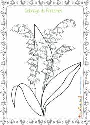 Coloriage du printemps : Dessin d'un grand brin de muguet que fleurit au printemps dans les sous-bois.