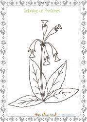 Dessin d'une fleur de printemps qui pousse dans les prés, dans les jardins et au bord des routes : le coucou. Un coloriage d'une fleur de printemps à imprimer.