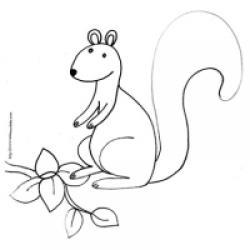 dessin d'un écureuil