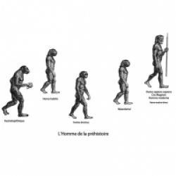 Evolution de l'homme