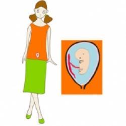 Le deuxième mois de grossesse