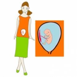 Le quatrième mois de grossesse