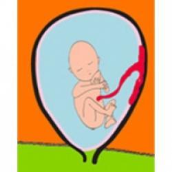 L'activité de bébé pendant le 5 ème mois