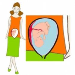 Taille de bébé à 7 mois de grossesse