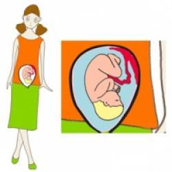 Le huitième mois de grossesse