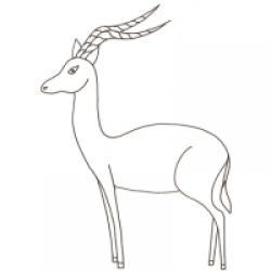 dessin d'un impala