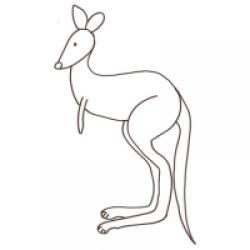 dessin d'un kangourou