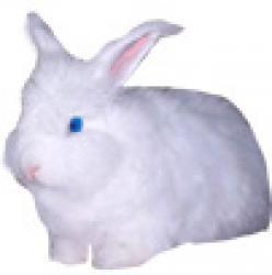 Lapin tout blanc