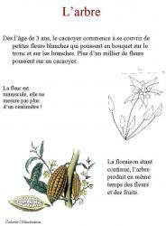 Réaliser un livre sur le cacao