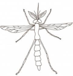 Coloriage des insectes