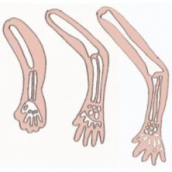 Les os de bébé s'allongent et s'épaississent. Bébé devient un gros consommateur de calcium au cours du 8 ème mois de grossesse. Il a besoin de calcium pour l'allongement de ses os, leur &am