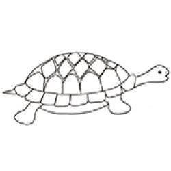 dessin d'une tortue