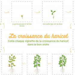 Planche sur le haricot à imprimer : aux enfants de remettre les images dans le bon ordre pour reconstituter la croissance du haricot