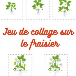 Un jeu à faire avec les enfants pour mieux connaître le cycle de vie et de croissance du fraisier. Nous vous proposons d'imprimer le jeu de vignettes sur le cycle de vie du fraisier, de demander à votre enfant de les découper puis de les coller dans l