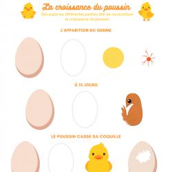 Dessiner, découper et coller la naissance du poussin pour découvrir le cycle de la poule à l'oeuf - activité 2
