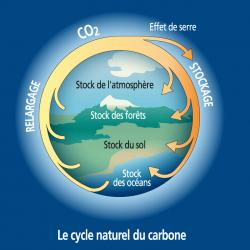 L'effet de serre pourrait s'auto alimenter et aggraver le réchauffement de la planète. Une partie de l'excès de dioxyde de carbone est absorbée par les océans. Le dioxyde