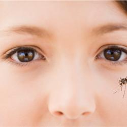 Zika, le virus Zika