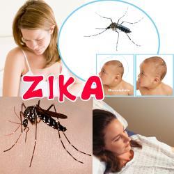 Zika, Mini dossier Zika