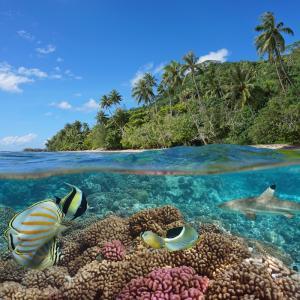 Oceanie - mot du glossaire Tête à modeler. Définition et activités associées au mot Oceanie.