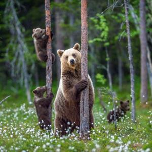 ours - mot du glossaire Tête à modeler. Définition et activités associées au mot ours.