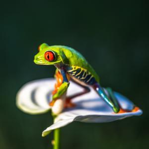 Amphibien: Mot du glossaire Tête à modeler. Un amphibien est un animal amphibie comme les tortues, les grenouilles et les crapauds.   Activités associées.