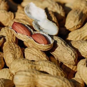 Arachide : Mot du glossaire Tête à modeler. L'arachide est une plante légumineuse tropicale dont les graines s'appellent les cacahouètes.   Activités associées.