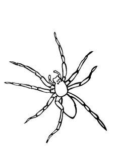 Coloriage araignée #03