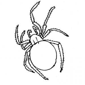 Coloriage araignée #04