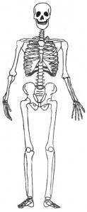Coloriage squelette #02