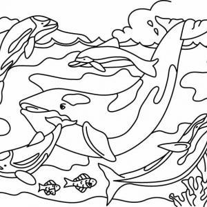 Baleine 03 - motif à imprimer
