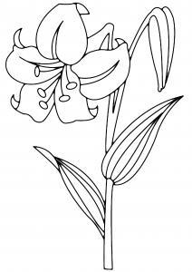 Fleur 003 - motif à imprimer