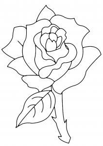 Rose 02 - motif à imprimer