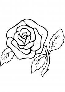 Rose 07 - motif à imprimer