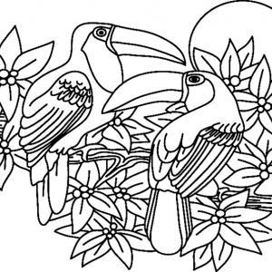 Toucan 02 - motif à imprimer